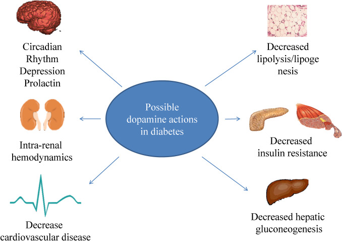 a review of dopamine agonist therapy in type 2 diabetes and effects