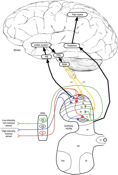 Mechanisms Of Chronic Pain From Whiplash Injury