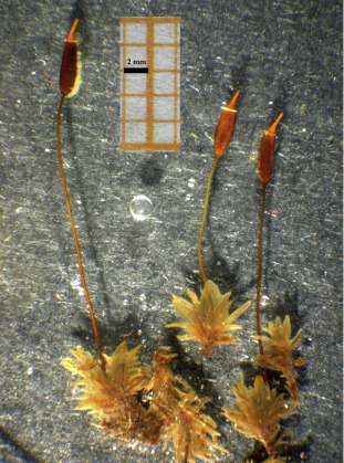 Forensic Botany As A Useful Tool In The Crime Scene Report Of A Case Sciencedirect