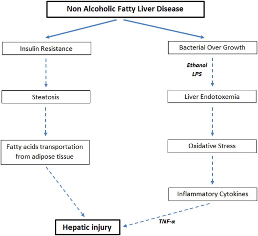 Boom of probiotics this time non alcoholic fatty liver disease a download full size image ccuart Gallery