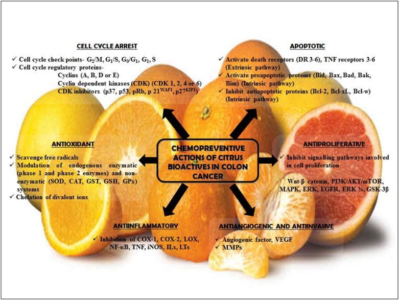 An Insight Into The Role Of Citrus Bioactives In Modulation Of Colon Cancer Sciencedirect