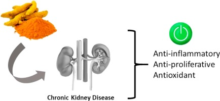 Curcumin A Promising Nutritional Strategy For Chronic Kidney Disease Patients Sciencedirect
