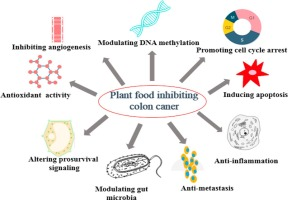 Plant Foods For The Prevention And Management Of Colon Cancer Sciencedirect