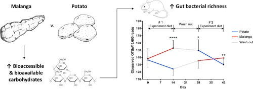 Physicochemical Differences Between Malanga Xanthosoma Sagittifolium And Potato Solanum Tuberosum Tubers Are Associated With Differential Effects On The Gut Microbiome Sciencedirect