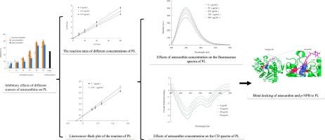 上胰脂肪酶与抑制动力学结合分子对接模拟的虾青素的抑制效果