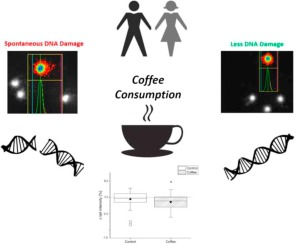 Dark coffee consumption protects human blood cells from