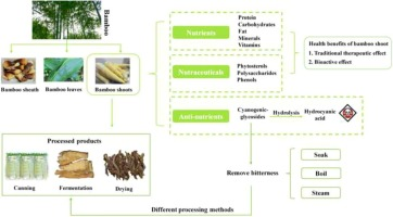 A Systematic Review On The Composition Storage Processing Of Bamboo Shoots Focusing The Nutritional And Functional Benefits Sciencedirect