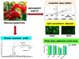 对3T3-L1细胞和脂肪酶活性的脂肪形成欧洲荚蒾果实提取物的影响