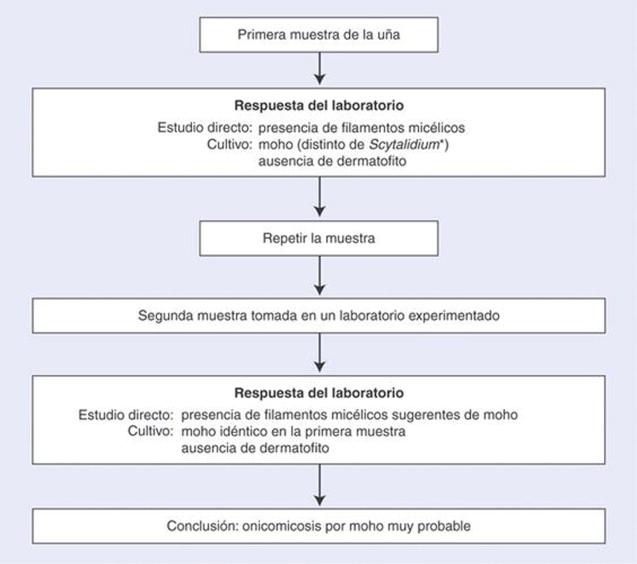 Estudio micológico en dermatología - ScienceDirect