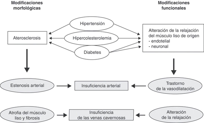 ¿Cómo causa la tiazida la disfunción eréctil?