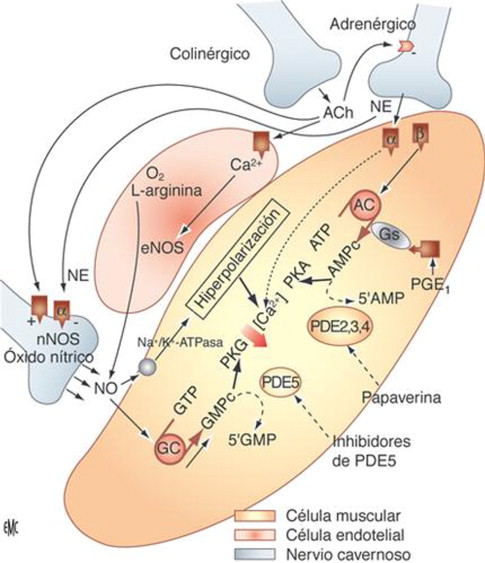 disfunción eréctil citalopram