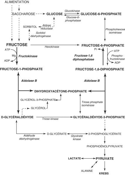 Anomalies héréditaires du métabolisme du galactose et du fructose ...