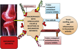 Treatment Of Rheumatoid Arthritis By Targeting Macrophages Through Folic Acid Tailored Superoxide Dismutase And Serratiopeptidase Sciencedirect