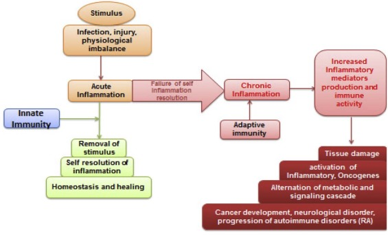 The role of serratiopeptidase in the resolution of inflammation
