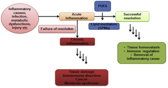 The role of serratiopeptidase in the resolution of