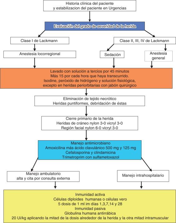 importancia del trabajo de laboratorio de infección por mordedura humana