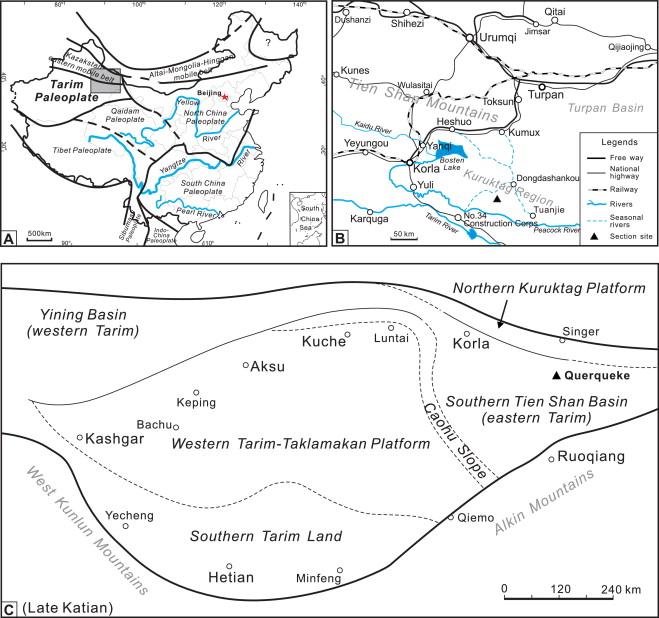Discovery of a Late Ordovician Foliomena fauna in the Tarim desert ...