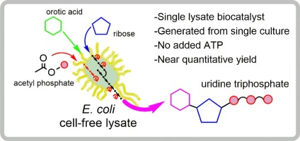Recombinant cell-lysate-catalysed synthesis of uridine-5