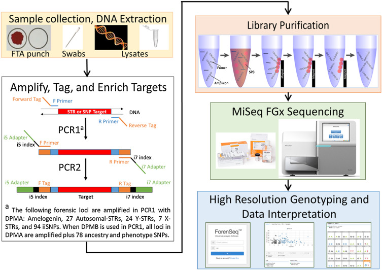 Developmental Validation Of The Miseq Fgx Forensic Genomics System For Targeted Next Generation Sequencing In Forensic Dna Casework And Database Laboratories Sciencedirect