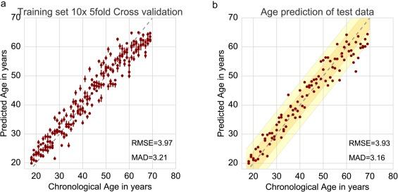 Chronological age prediction based on DNA methylation: Massive
