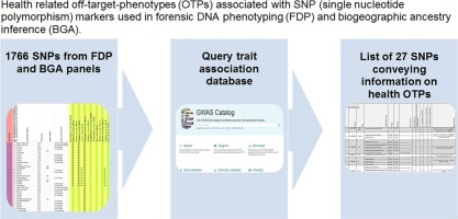 Off-target phenotypes in forensic DNA phenotyping and biogeographic