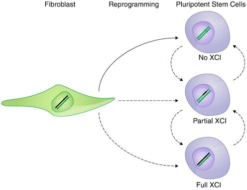 Meta-analysis of the heterogeneity of X chromosome