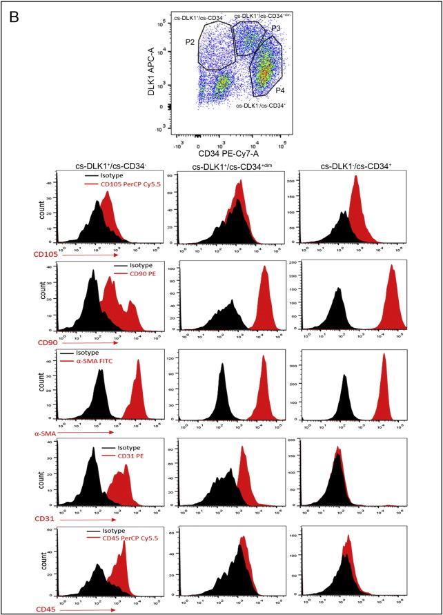 Characterization of DLK1(PREF1)+/CD34+ cells in vascular