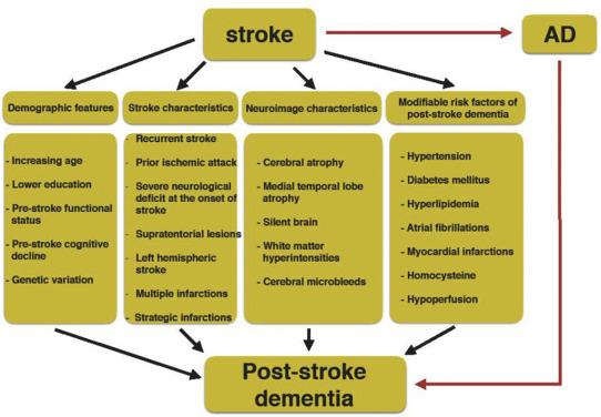 Post-stroke Dementia: Epidemiology, Mechanisms and
