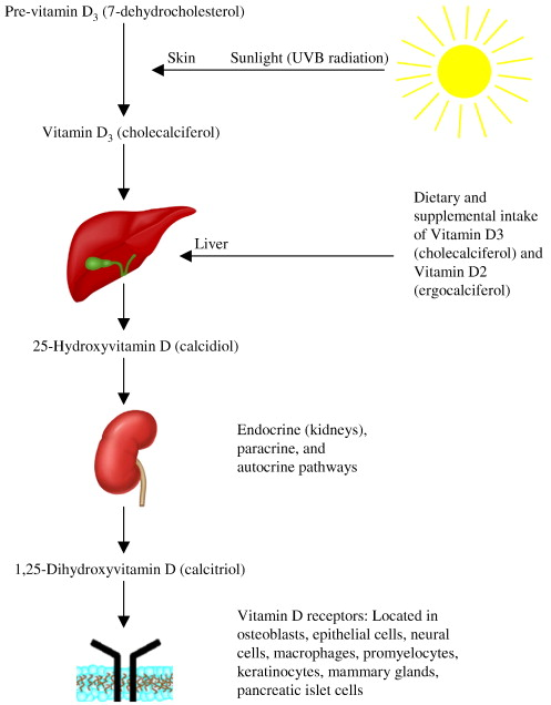 Management of inflammatory bowel disease with vitamin D