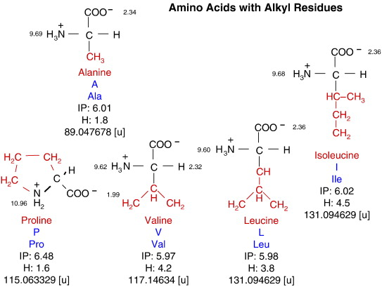 Amino acids chemistry functionality and selected non enzymatic download high res image 342kb thecheapjerseys Gallery