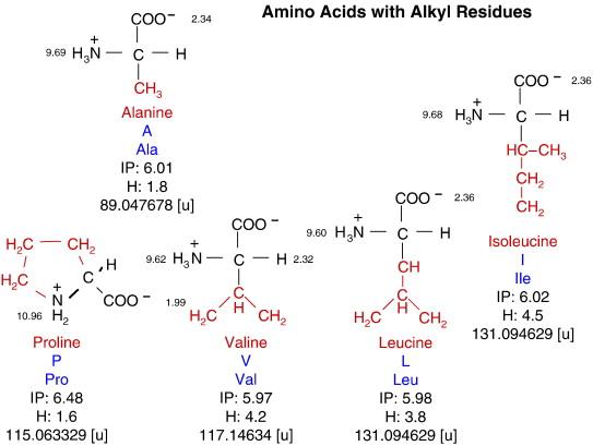 aliphatic amino acids list