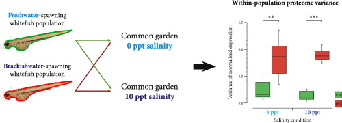 Proteome variance differences within populations of European