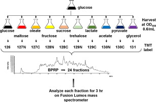 Quantitative mass spectrometry-based multiplexing compares the abundance of 5000 S. cerevisiae proteins across 10 carbon sources - ScienceDirect