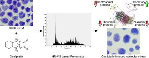1 s2.0 S1874391917301604 fx1 proteomic profiling reveals dna damage, nucleolar and ribosomal