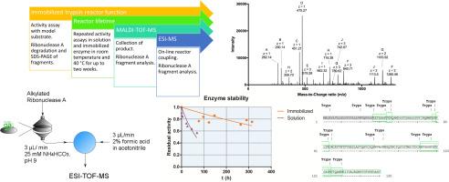 a flow through nanoporous alumina trypsin bioreactor for mass