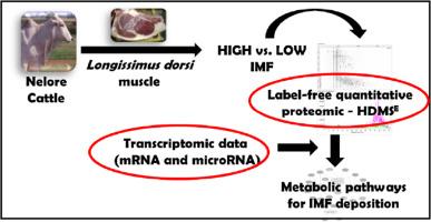 Longissimus Dorsi Muscle Label Free Quantitative Proteomic Reveals