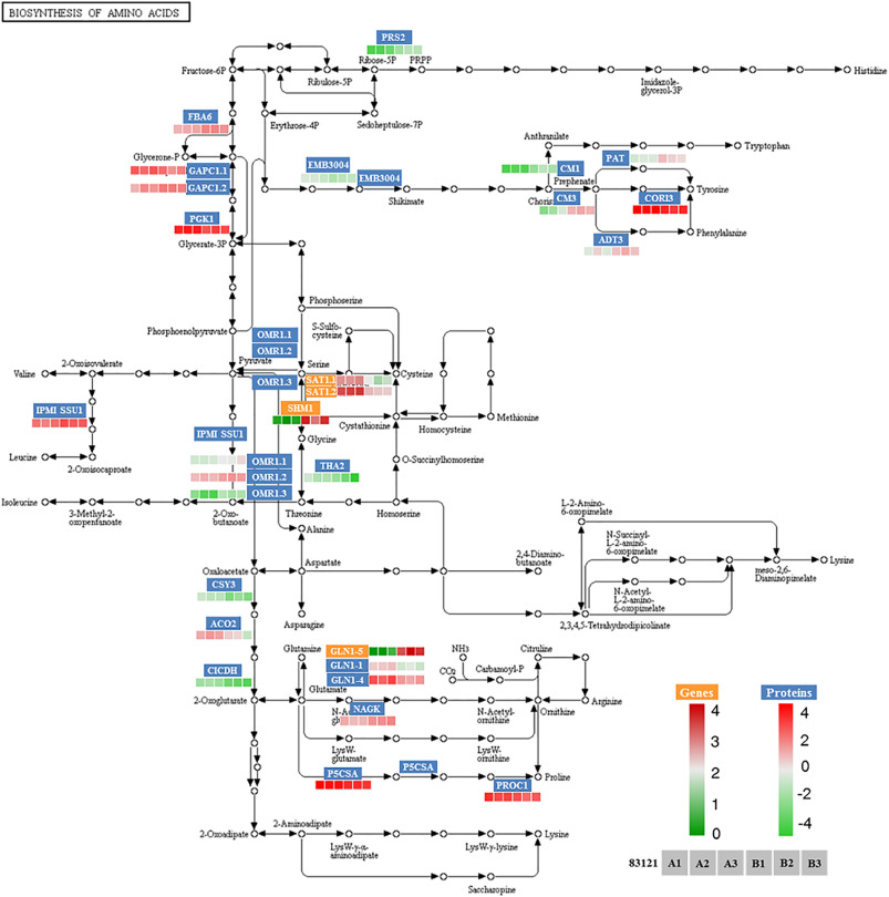 Complementary transcriptome and proteome profiling in