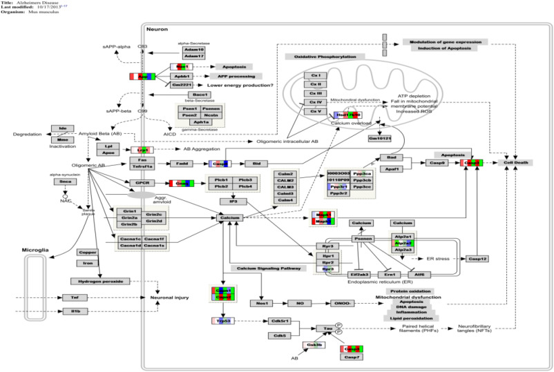 Gift Pr Diagram Flowchart Ms Microsoft Visio 2019 Type Software 19 An Enriches And Nutrient For The Liver And Kidney Office & Business Computers/tablets & Networking