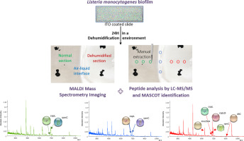 MALDI mass spectrometry imaging and in situ microproteomics of