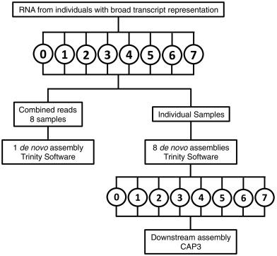 De novo transcriptome assembly of the calanoid copepod Neocalanus