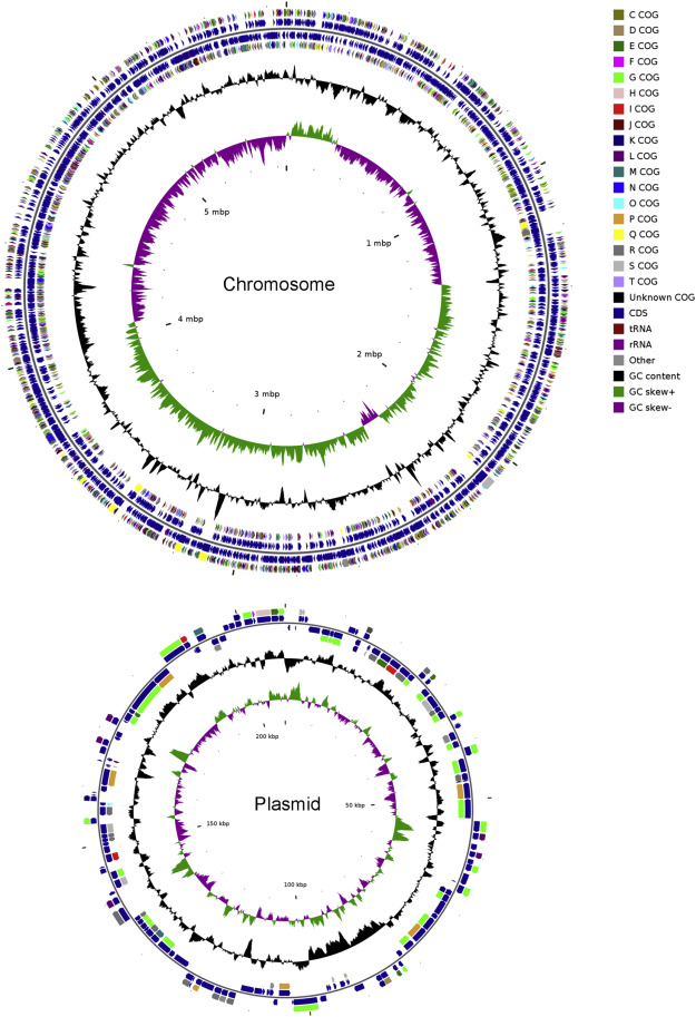 Complete genome sequence of the novel agarolytic Catenovulum-like