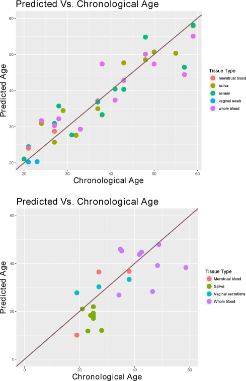 A multi-tissue age prediction model based on DNA methylation