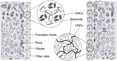 Performance of low solid bentonite drilling fluids modified by