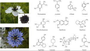 Phytochemistry, pharmacology, and therapeutic uses of black