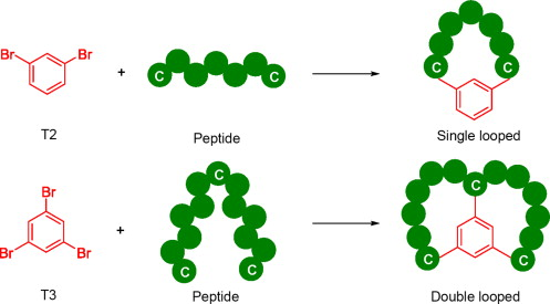Chemical Platforms for Peptide Vaccine Constructs