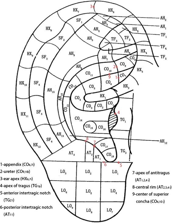 Aurikulotherapie Punkte zum Abnehmen pdf Editor