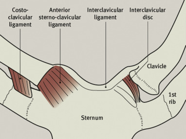 Disorders of the sternoclavicular joint - ScienceDirect