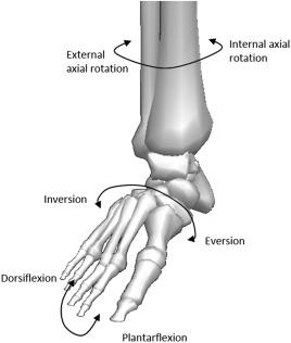 Biomechanics of the ankle - ScienceDirect