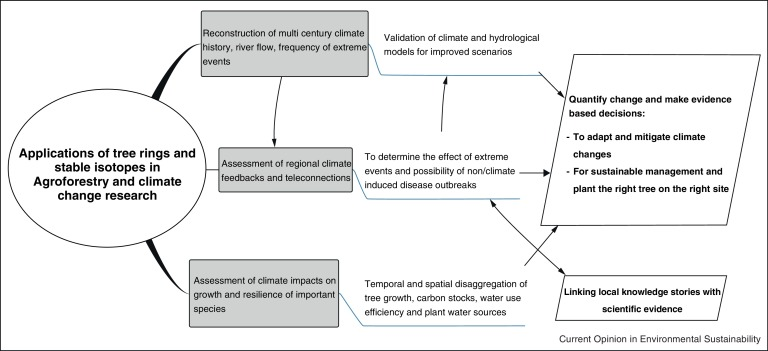 Fat tree ring dating and climate change