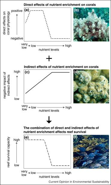 kwaliteit goede service nieuwe hoge kwaliteit Impacts of nutrient enrichment on coral reefs: new ...